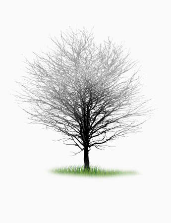 pine boughs: Illustration silhouettes of trees