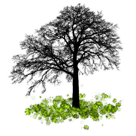 maple tree: Vector - Maple tree, autumn leaf fall