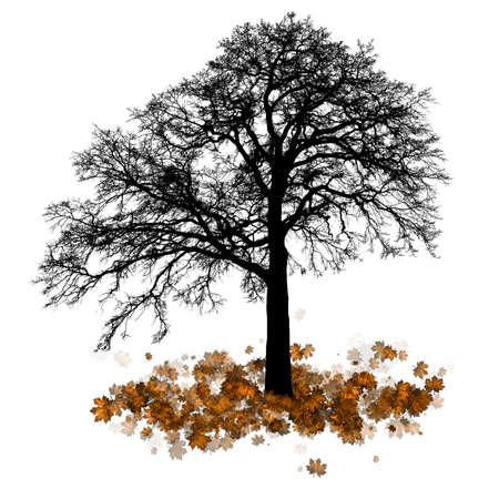 Vector - Maple tree, autumn leaf fall Vector