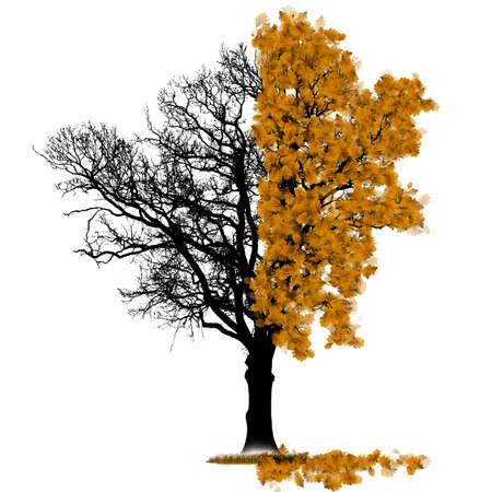 Два сезона дуб, символизирующий осенью и зимой