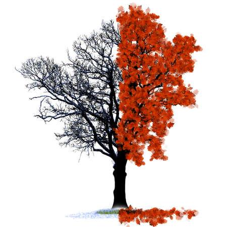 Two seasons oak symbolizing autumn and winter