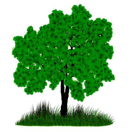 Зеленый дерево на белом фоне Иллюстрация