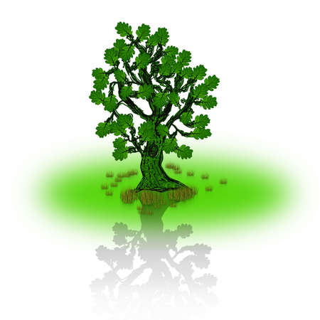 Tree vector oak Vector