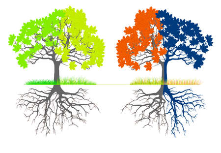 Vector - Tree at four seasons Trees with green, yellow and orange leaves Tree without leaves at winter Иллюстрация