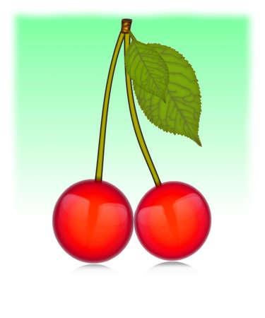 fruited: Vector - Two cherries Illustration