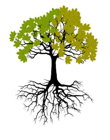 Two seasons - spring, summer. Art tree beautiful for your design. Vector illustration, vector
