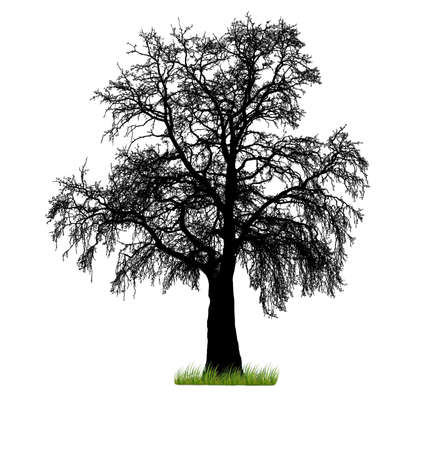 bareness: Vector tree silhouette Illustration