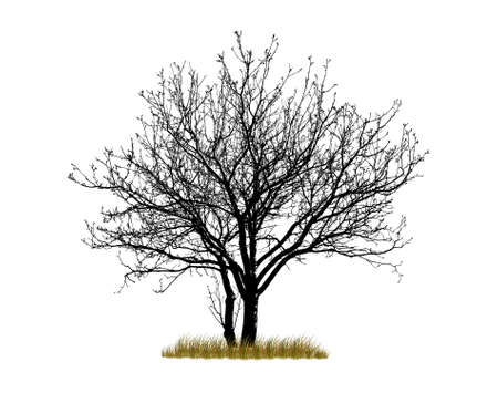 Vector tree isolated on white background