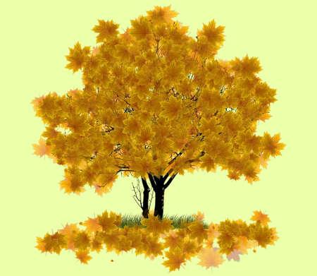 maple tree: orange autumn maple tree