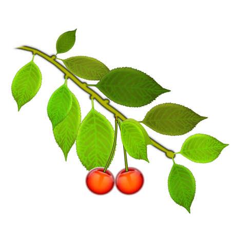 Спелые красные вишни ягоды с листьями. Вектор.