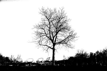 genealogical: black tree silhouette isolated on white background