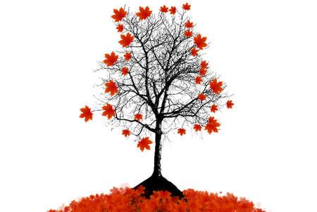 maple tree: Maple tree autumn leaves background