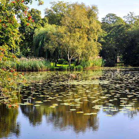 Лили пруда в городском парке
