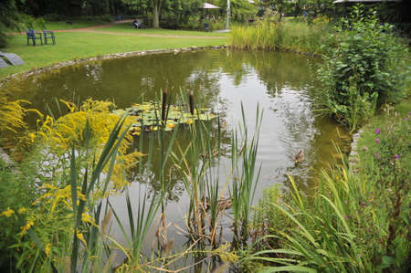 Lily pond in a city park