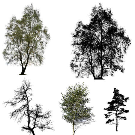 bareness: Collection of trees silhouettes Stock Photo