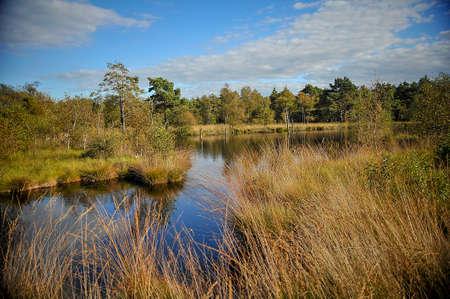 View of the swamp.Pietzmoor.Schneverdingen Фото со стока