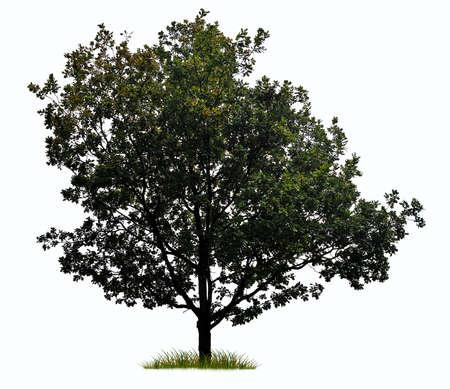 силуэт дерева на белом фоне