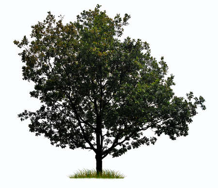 allegory painting: tree silhouette isolated on white background