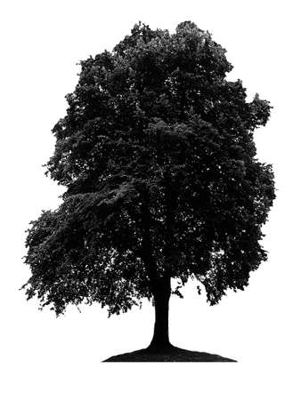 vectorial: tree silhouette isolated on white background