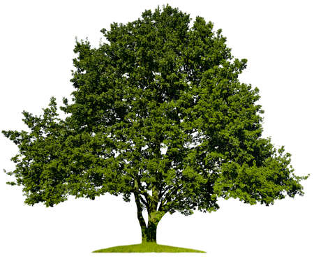 Beautifull green tree on a white background in high definition Illustration