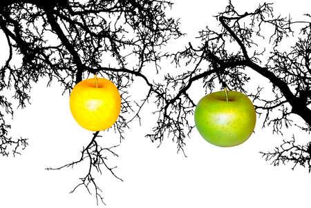 Apple on branch Stock Photo