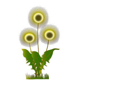 overblown: Dandelions. Illustration.