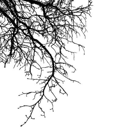 Realistic tree branches silhouette (Vector illustration) .Eps10