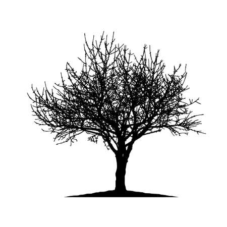 Realistic tree silhouette (Vector illustration) .Eps10