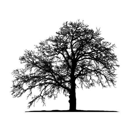 Realistic oak tree silhouette (Vector illustration) .Eps10 Illustration