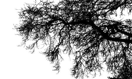Realistic tree branches silhouette