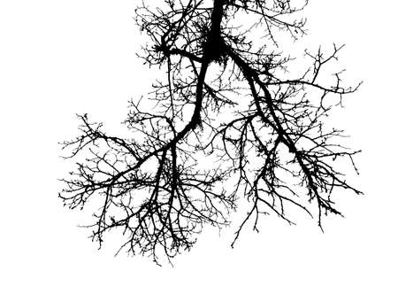 Realistic tree branches silhouette vector illustration.