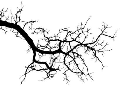 Realistic tree branches silhouette vector illustration