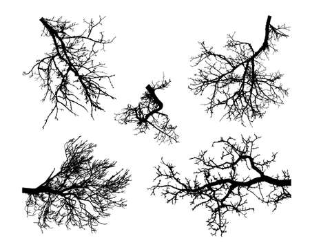 Realistic set of tree branches silhouette.