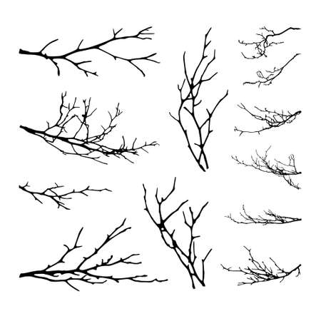 Realistic set of tree branches silhouette. Vector illustration.