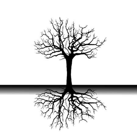 Roots reflection  illustration Illustration