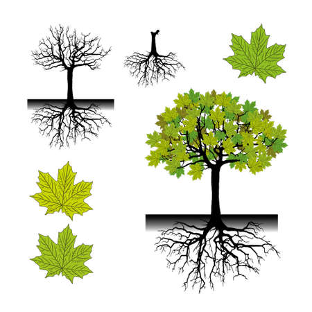Realistic tree silhouette with roots