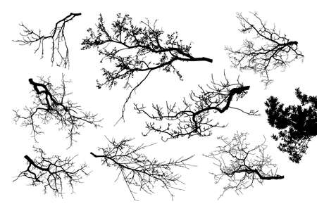 Realistic set of tree branches silhouette (Vector illustration).