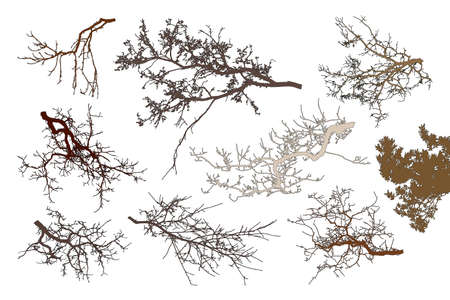Realistic set of tree branches silhouette (Vector illustration). Different color shades Illustration