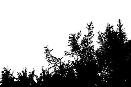 Realistic silhouette of a bush with leaves