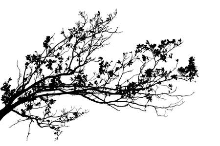 Realistic tree branches silhouette on white background Illustration