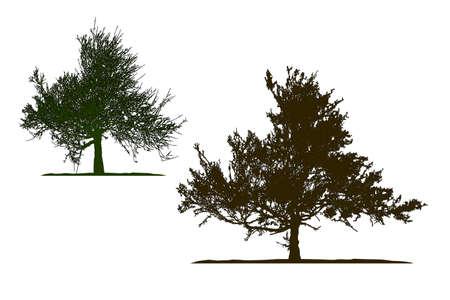 Realistic tree silhouette .Tamarix gallica on white background