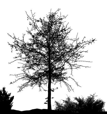Realistic tree silhouette (Vector illustration). Stock Illustratie