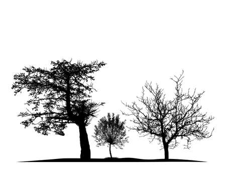Realistic trees silhouette