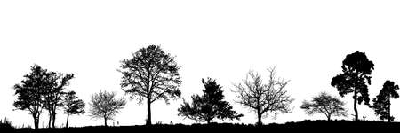 Realistic set of trees silhouette