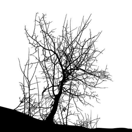 Realistic tree silhouette (Vector illustration).Eps10