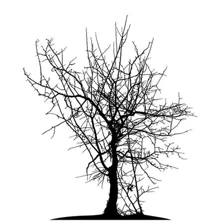 Realistic tree silhouette (Vector illustration).Eps10