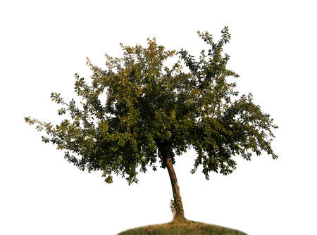 Natural tree silhouette on white background