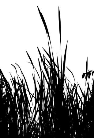 grass silhouettes from nature on white background
