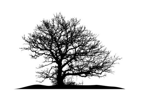 silhouette of a natural oak on a white background
