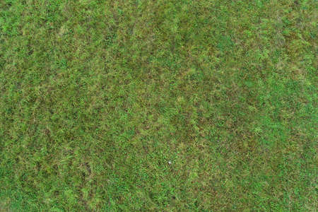 Real green texture background of a grass. Imagens